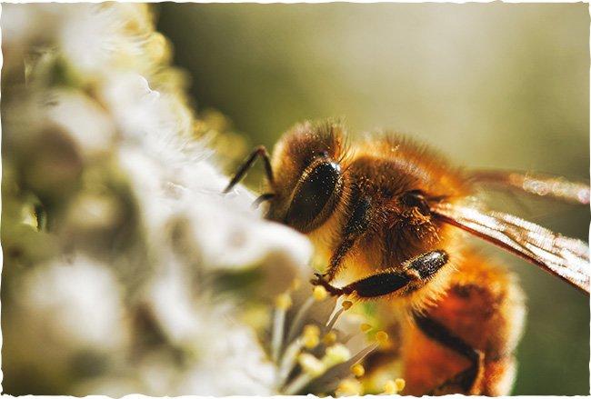 Was gibt es für Bienen