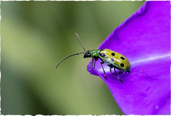Wilde Blumen für Insekten