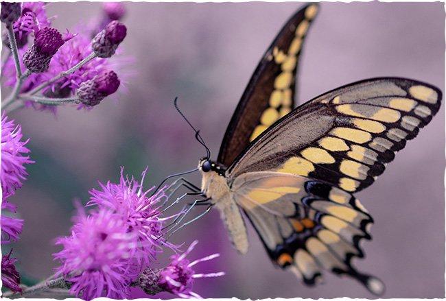 Schmetterlinge Wildblumensamen