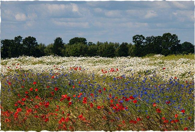 Wildblumenwiese mit verschiedenfarbenen Blumen
