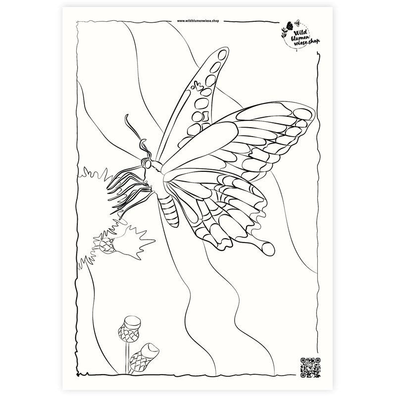 Ausmalbild Schmetterling