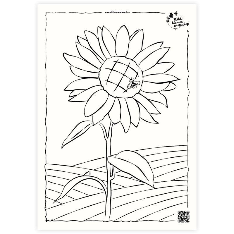Ausmalbild Sonnenblume